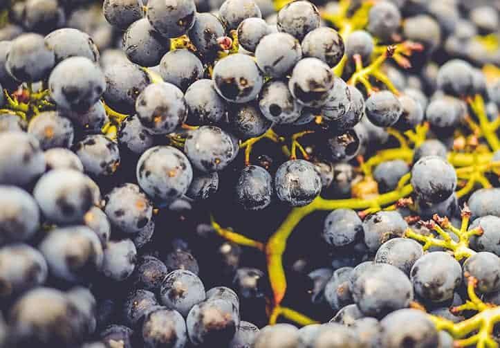 Weintrauben - Weingut Pinetz - Frauenkirchen